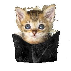 Pocket kitten.png