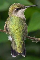 selected bird.JPG