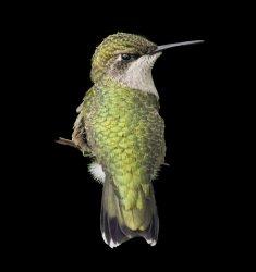 Bird-with-Black-Background.jpg