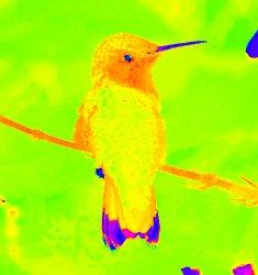Bird-Hue-component.jpg