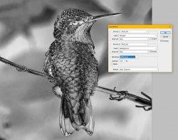 Bird - Calculation.jpg