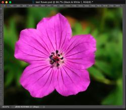 Screen Shot 2020-11-15 at 11.34.01 PM.png