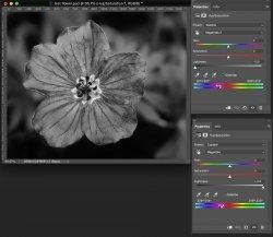 Example-Flower-narrow-Hue-shifts.jpg