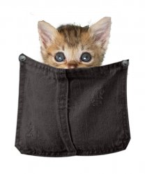 kitty in black pocket without background.jpg