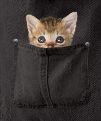 kitty in black pocket with background.jpg