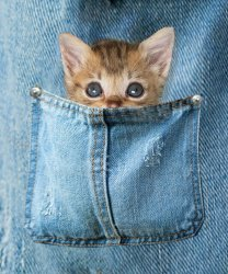 kitty in pocket with background.jpg