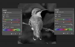 Bird-B&W-conversion.jpg