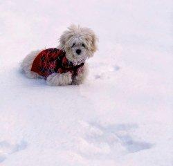 doggie leash edited 1.jpg