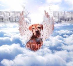 Dog in clouds WM.jpg