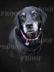dog portrait edited.jpg
