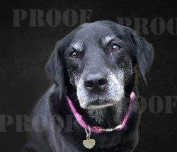 dog portrait edited cropped.jpg