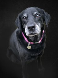 dog portrait FINAL.jpg