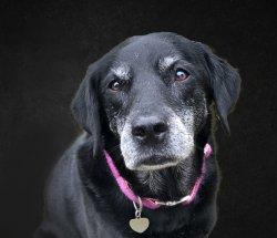 dog portrait edited cropped FINAL.jpg