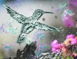 hunningbird edited instagrram.jpg