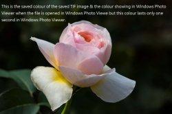 the colour.jpg