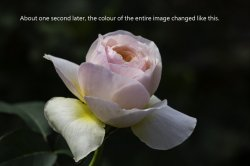 colour change.jpg