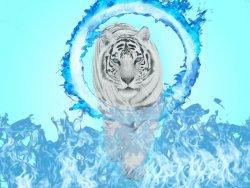 Tiger v2.jpg
