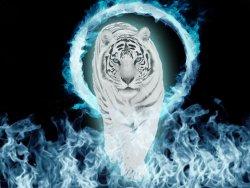 snow-tiger-blue-fire.jpg