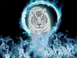 snow-tiger-blue-fire-normal-blend.jpg