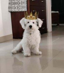 crowned doggo.jpg