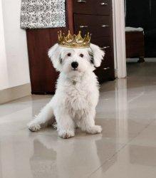crowned.jpg