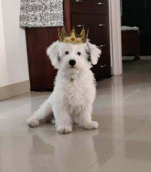 crowned doggo REV 2.jpg