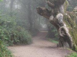misty-396700_1280.jpg