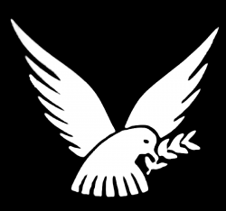 somerford-park-logo (1)-4.png