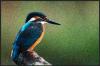 Screen Shot 2015-04-11 at 8.39.56 AM.png
