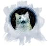 universe_cat.png