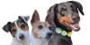 3dogs.png
