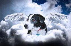 2 dog wings.jpg