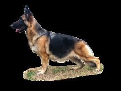 Dog 2.png