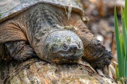Turtle-EDIT-1.jpg