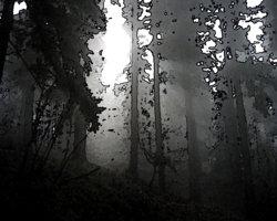 Untitled-12_2a.jpg