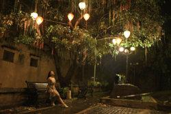tree lights edit.jpg