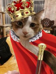 Royal Cat.png