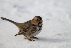 BirdInSnow_02.jpg