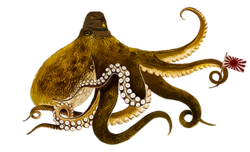 octopus 2.png