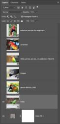 Screen Shot 2020-02-26 at 10.42.37 AM.png