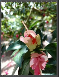 red flower side by side with mask.JPG